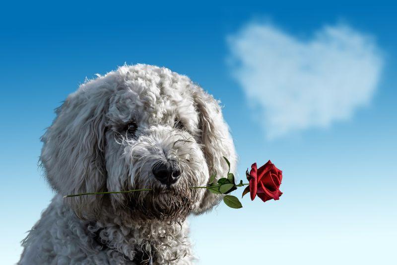Jaki prezent na Walentynki?